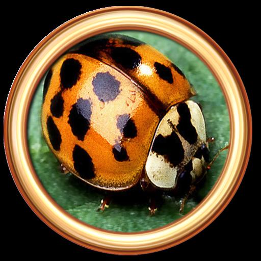 Bug Defender