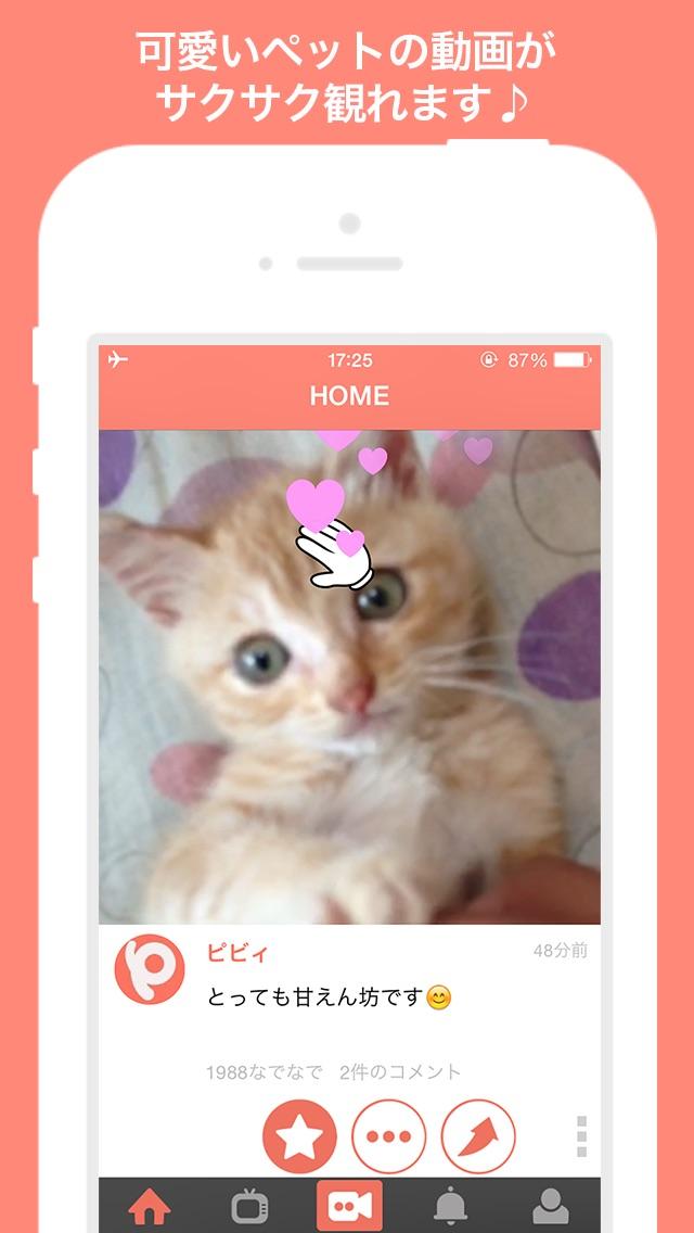 犬や猫の動画がいっぱい!動画編集も簡単!〜PiVid〜紹介画像1
