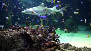 Aquarium live free på PC