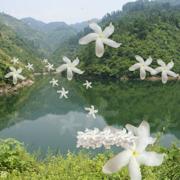 经典老歌100首,80后,70后,爸妈的经典回忆 Chinese Old Songs