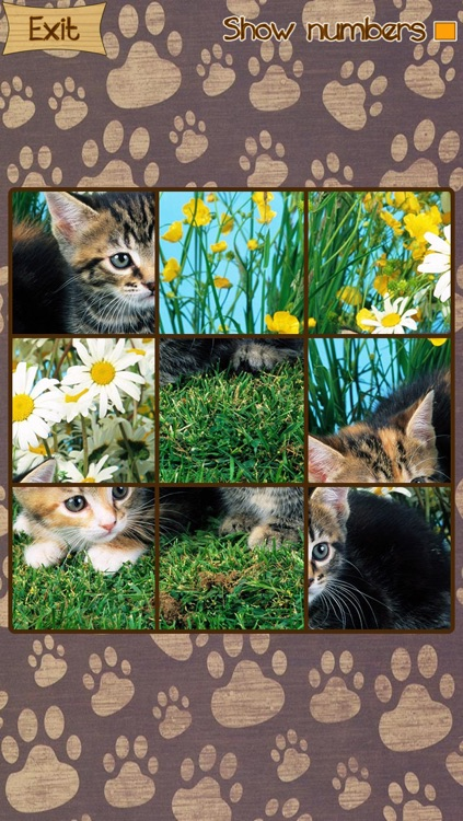 Kitten Slide Puzzles screenshot-2
