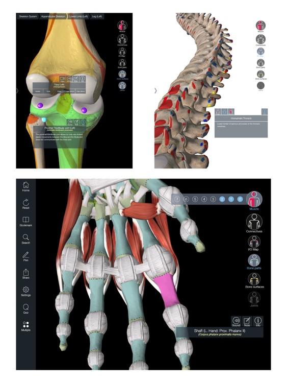 Essential Muscle + Skeleton Anatomy screenshot-4