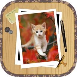Kitten Slide Puzzles