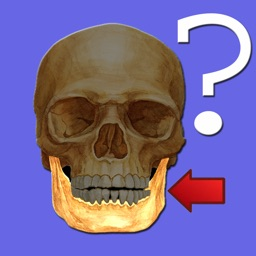 Anatomy Quiz for iPad