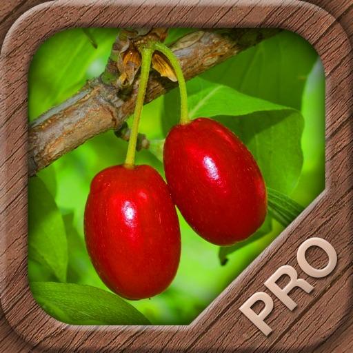 Früchte und Beeren aus Natur und Garten PRO - NATURE MOBILE