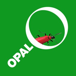 OPAL Bugs Count Pocket ID Guide