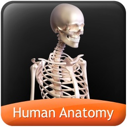 Human Anatomy Explorer Skeletal System