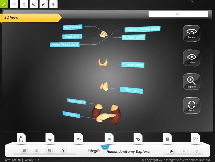 Human Anatomy Explorer - Endocrine System screenshot-3