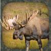 Pico Brothers - Älglockljud - Moose Hunting Calls bild