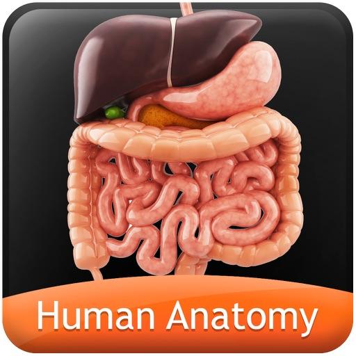 Human Anatomy Explorer - Digestive System