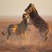 95.动物世界-海豚企鹅狮子老虎动物乐园,领略和谐大自然物语