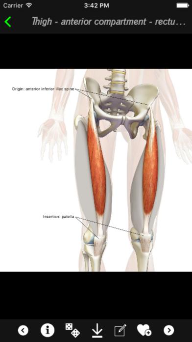 Human Muscles Infoのおすすめ画像3