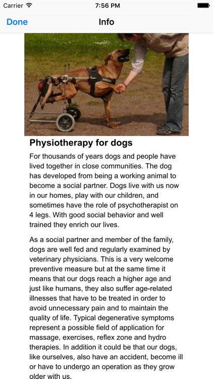 Physiotherapy for dogs