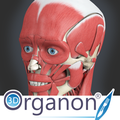 3D Organon Anatomy - Muscles, Skeleton, and Ligaments