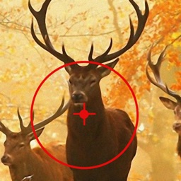 Free Deer Hunting Calls