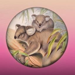 Field Guide to Queensland Fauna