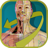 Visual Acupuncture - GraphicVizion