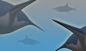 Shark Shock - Survive the hungry sharks!
