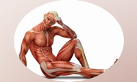 Human Muscles +