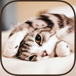 Cat Wallpapers & Backgrounds HD - Home Screen Maker with Themes of Pretty Kittens