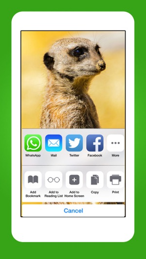 Animals Cute Animal Wallpapers Wild Life Backgrounds On The App