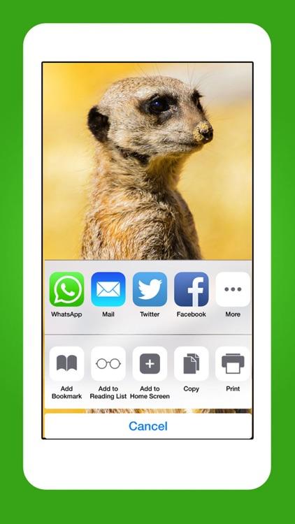 Animals - Cute Animal Wallpapers & Wild Life Backgrounds screenshot-4
