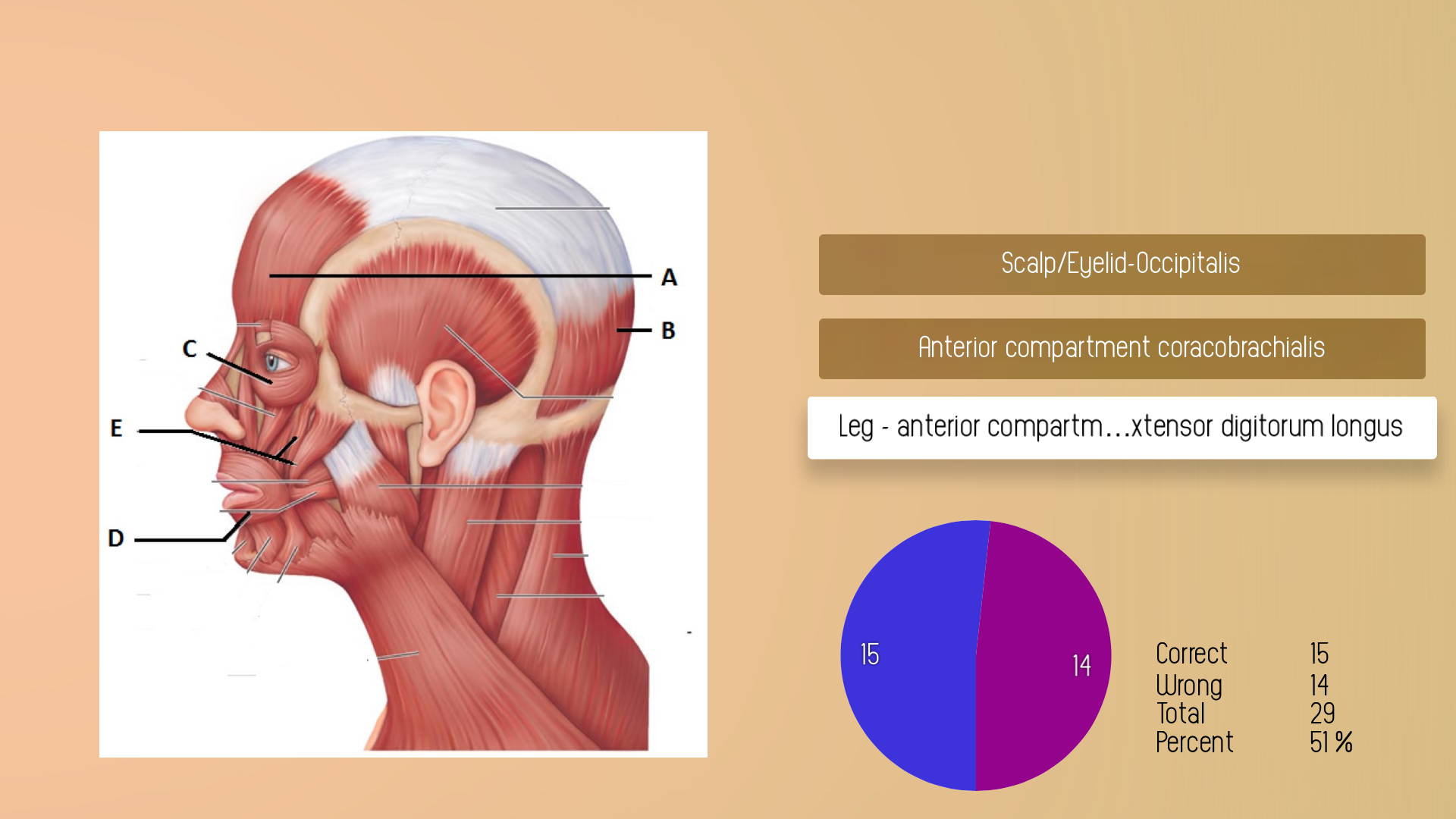 Human Muscles Guide screenshot 17