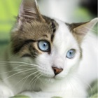 Cat Training - Learn How to Train and Care For Your Cat icon
