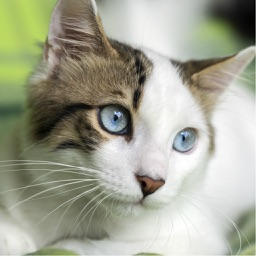 Cat Training - Learn How to Train and Care For Your Cat