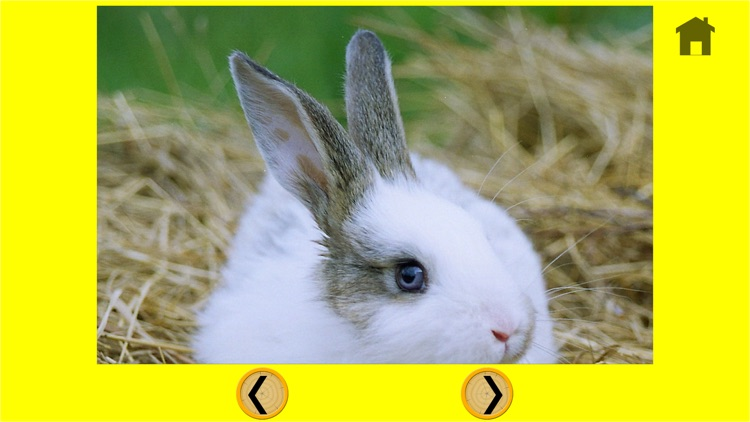 irresistible rabbits for kids - free screenshot-4