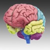 3D Brain iPhone / iPad