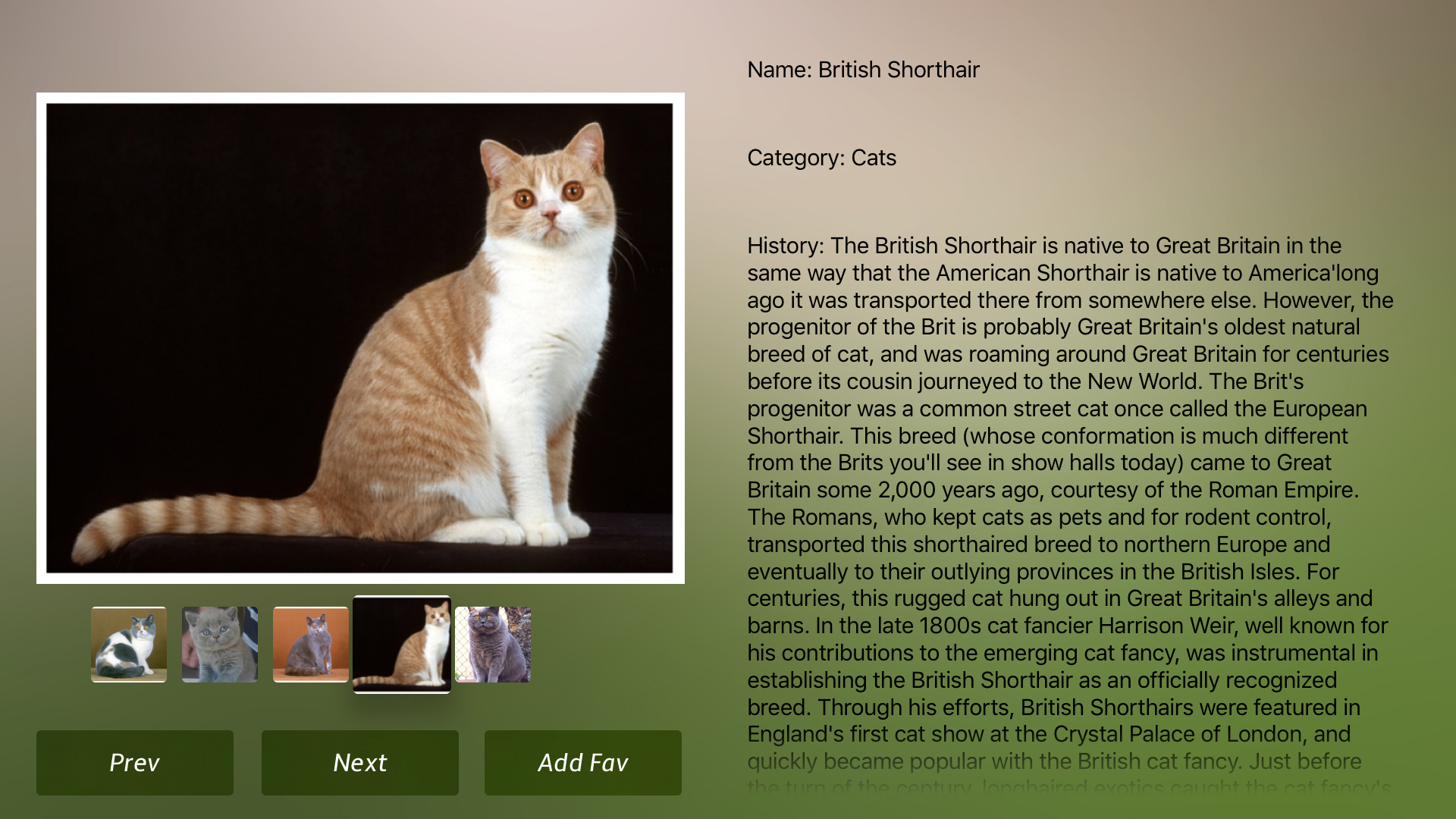 Cat Breeds Guide screenshot 17