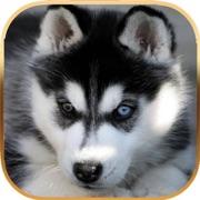 Talking Dog - Virtual Pet Husky