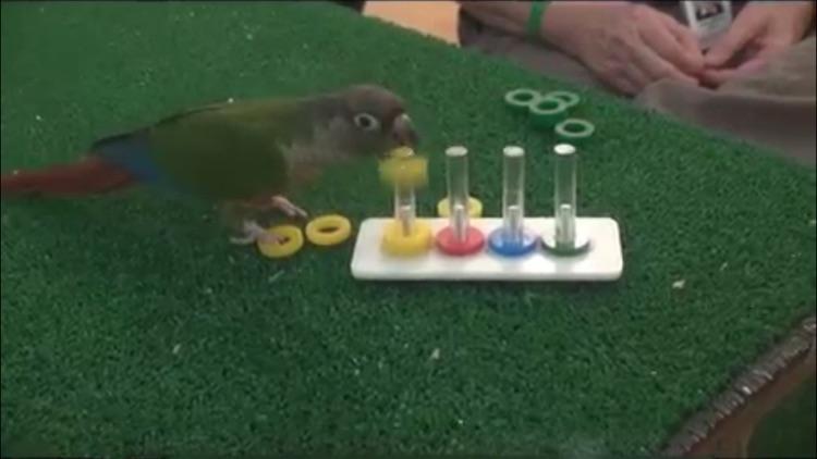 Training A Parrot screenshot-3