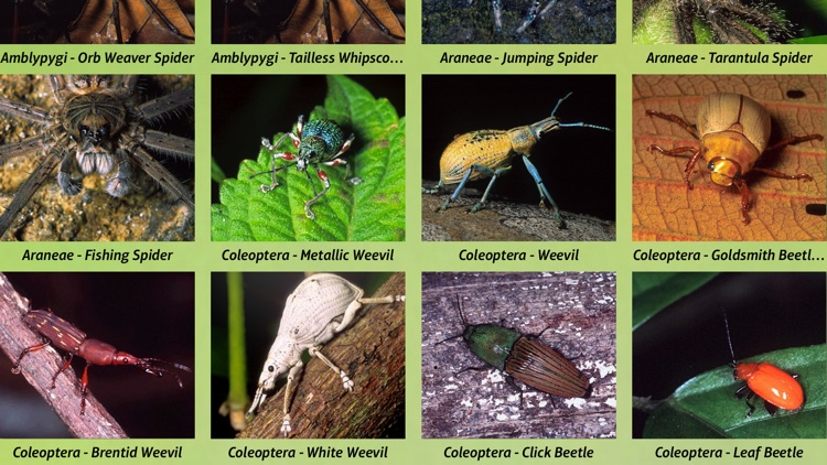 Insects Pedia Pro