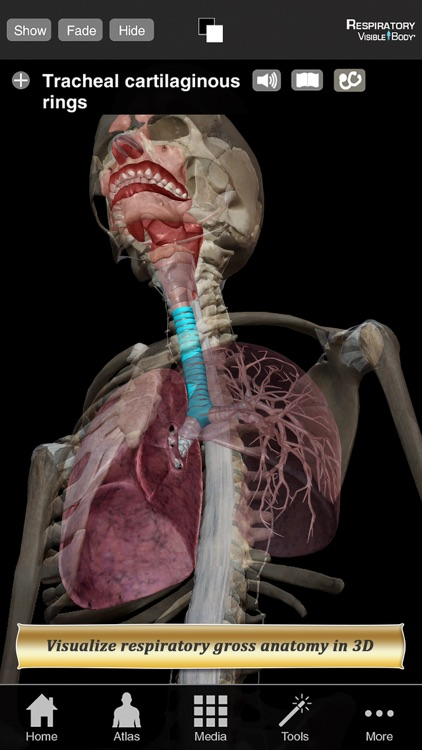 Respiratory Anatomy Atlas: Essential Reference for Students and Healthcare Professionals screenshot-0