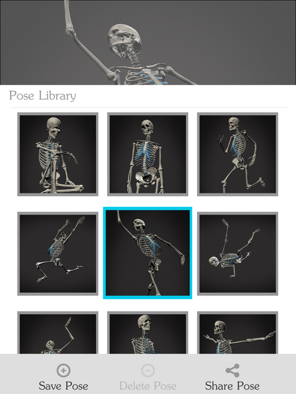 Skelly - Poseable Anatomy Model for Artistsのおすすめ画像4