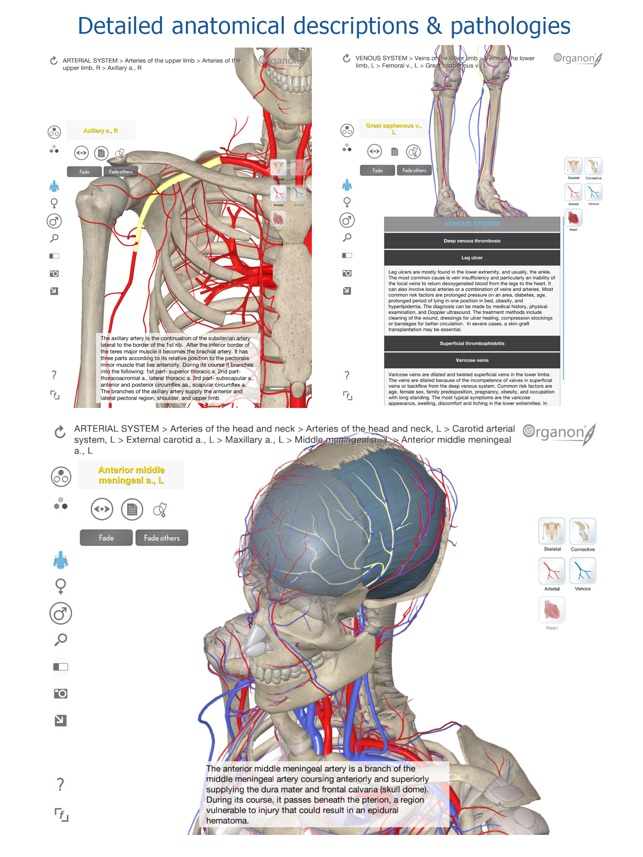 3D Organon Anatomy - Heart, Arteries, and Veins on the App Store