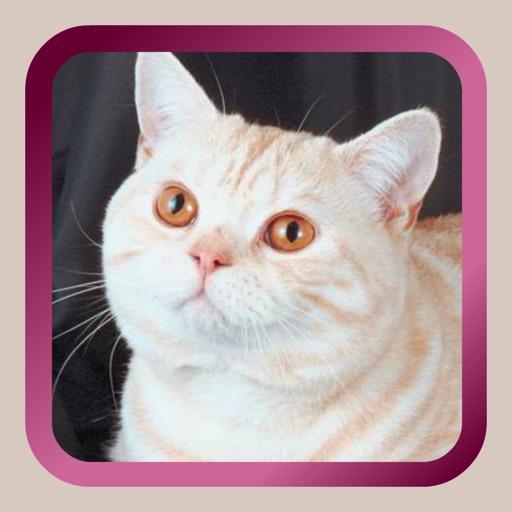 Kitty Cat Mah Jongg Solitaire iOS App