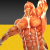 KT perfect taping GmbH - Muscle Test part 1 アートワーク