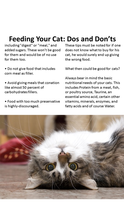 A Cats Best Moments screenshot-3