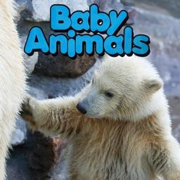 Baby Animals - CLIL Reader