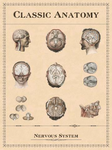 Classic Anatomy screenshot