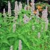 Medicinal Herbs Guide