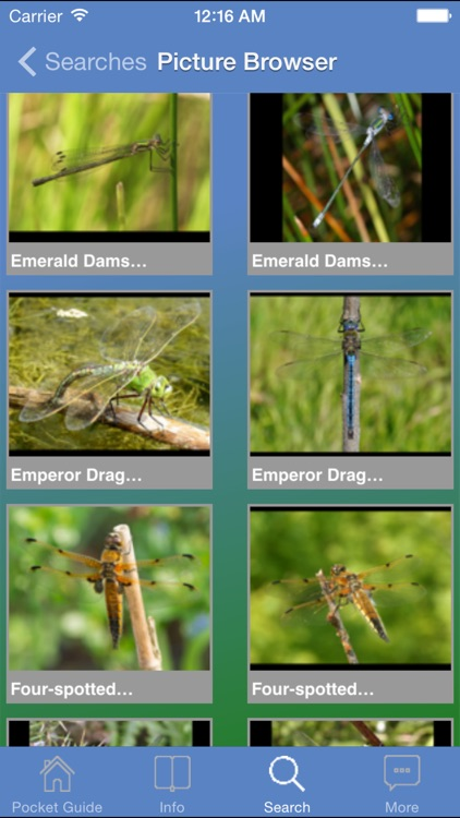 Pocket Guide UK Dragonflies