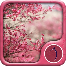 Sakura Wallpaper: Best HD Wallpapers