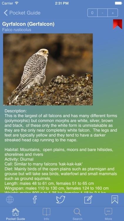 Pocket Guide UK Birds of Prey