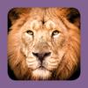 Sasol Soogdiere vir Beginners (Lite): Blitsfeite, foto's en video's van 46 Suider-Afrikaanse diere