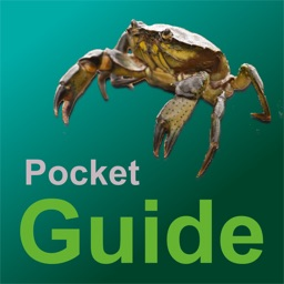 Pocket Guide UK Sea Fishing Bait