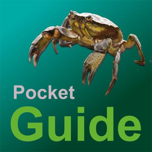 Pocket Guide UK Sea Fishing Bait